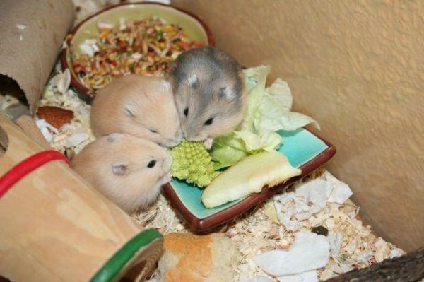 Arún, Lila y Siban