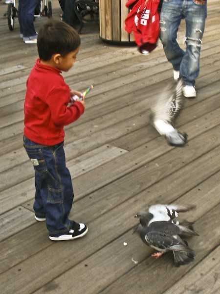 kid chasing birds