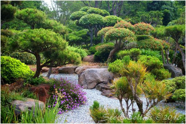 Japanese Gardens 01