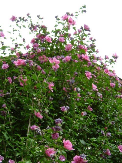 Flower Pile.
