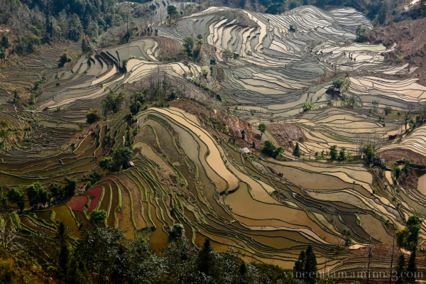 Yuanyang Rice Terraces #1