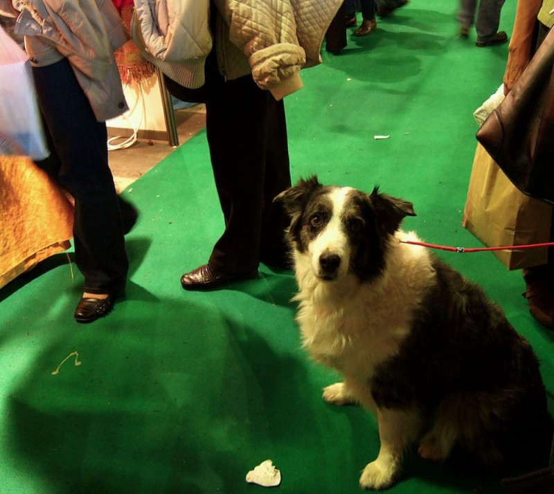 Dog at Health Food Trade Show