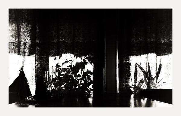 Silhouette of table, bottles, plants, curtains.