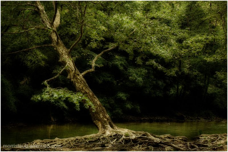 River, trees, roots, green and soft.