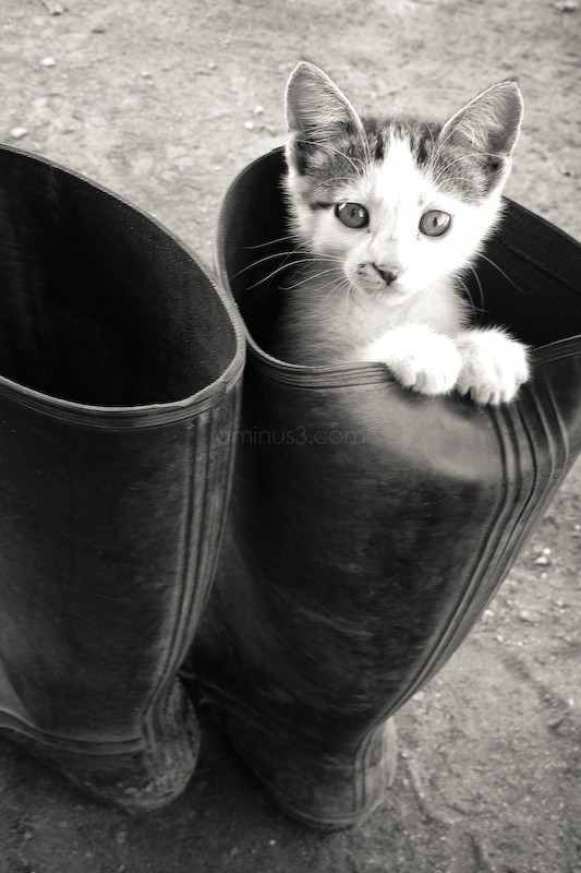 Cat in the boot