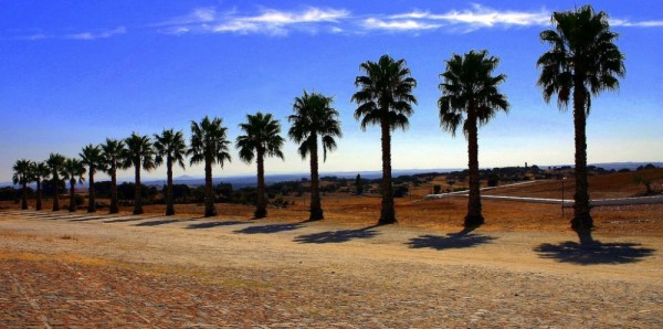 Palms in Portugal