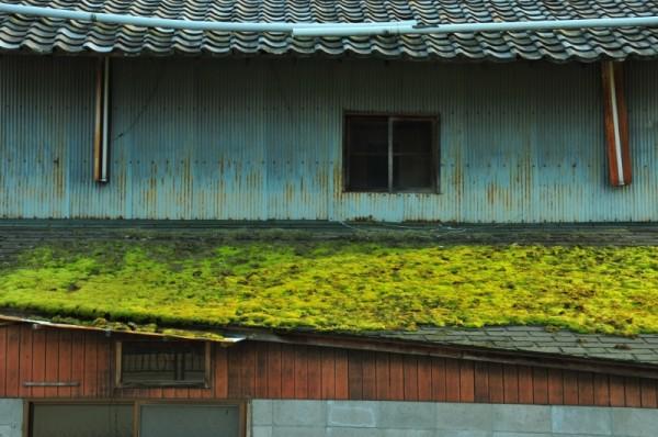 Windows and Gates, 1: Moss (苔)