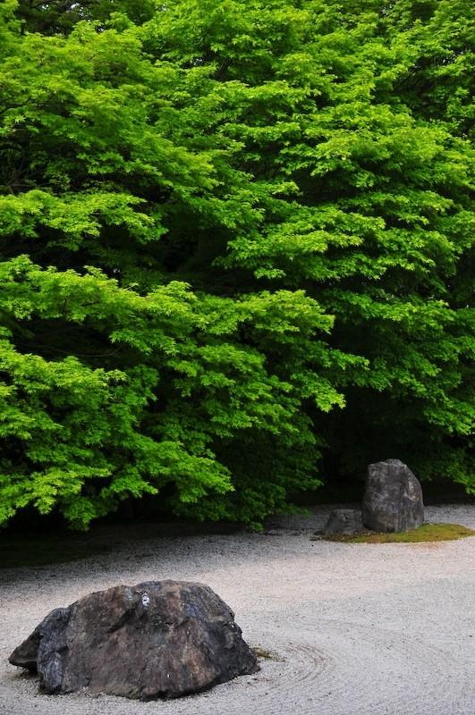 Spring at Iwakura Jisso-in Temple, 2 (岩倉実相院)
