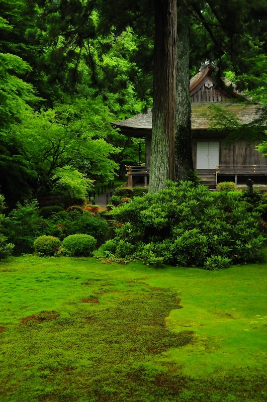 Sanzenin Temple, Ohara (三千院 大原)