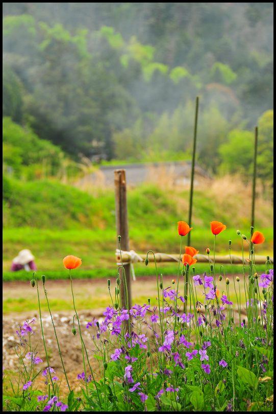 Spring Mist: Working in the Garden