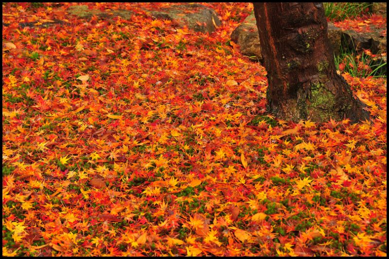 Autumn Carpet