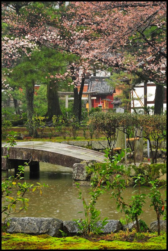 Hints of Spring, Kenninji Temple