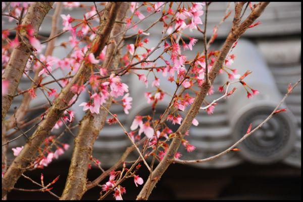 Spring Returns