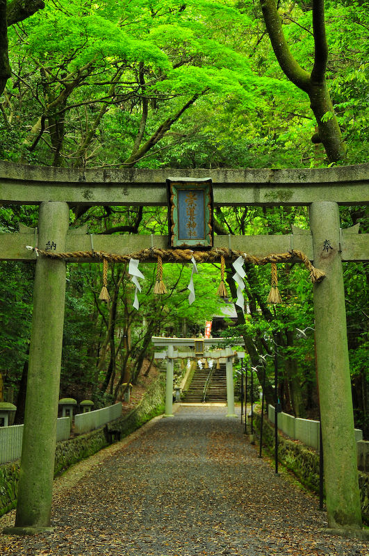 Sacred Spaces: Sacred Ground (崇道神社)