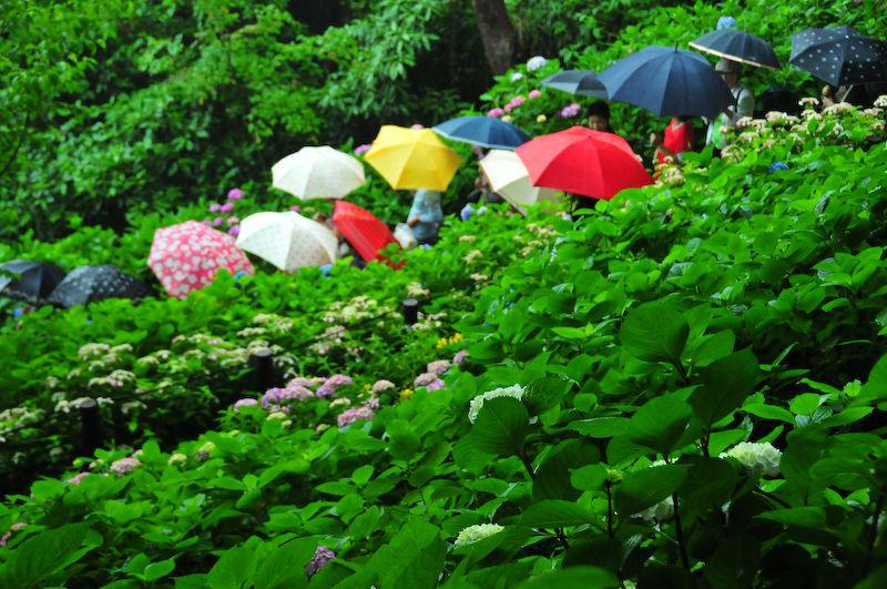 Rainy Season Blossoms