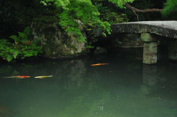 Quiet Swim