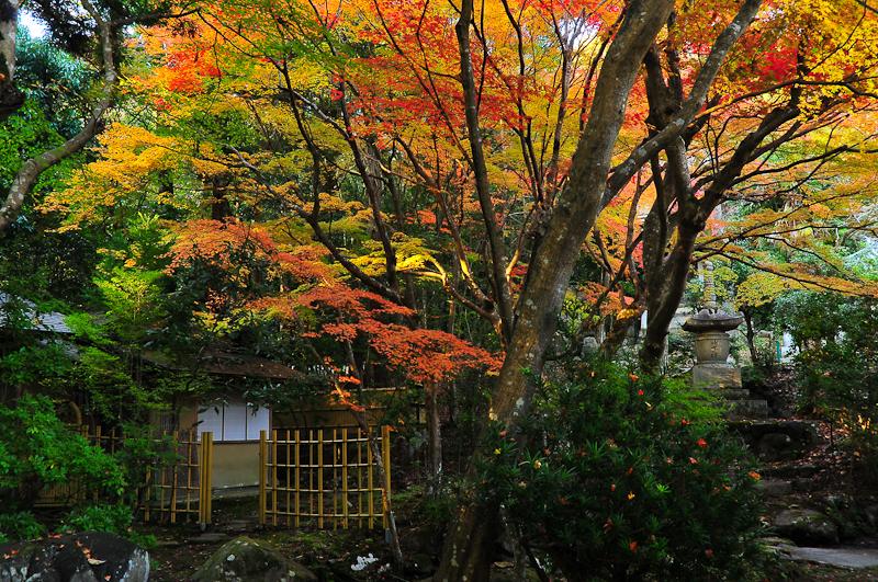 A Celebration of Tea: Autumn Teahouse