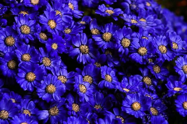 Flowers VII