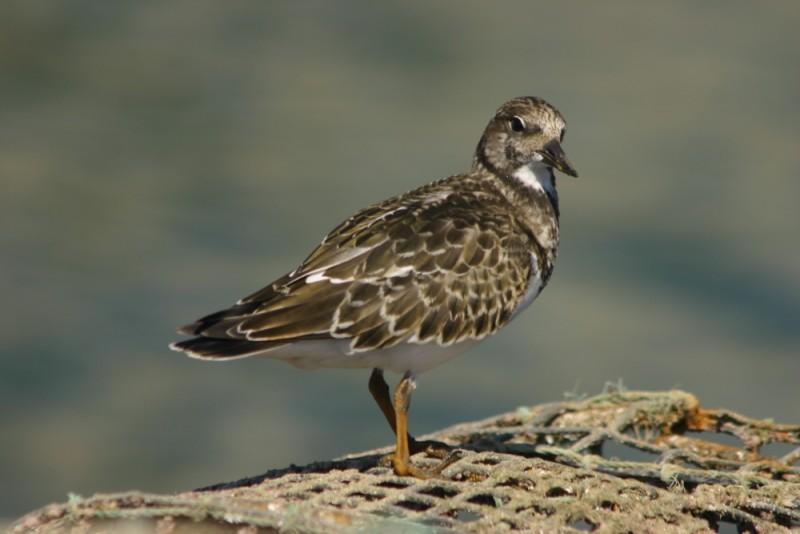 birds IX