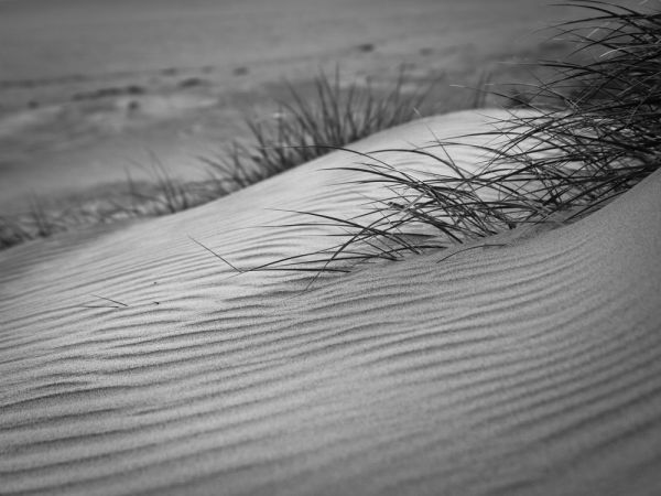 Sandy black and white