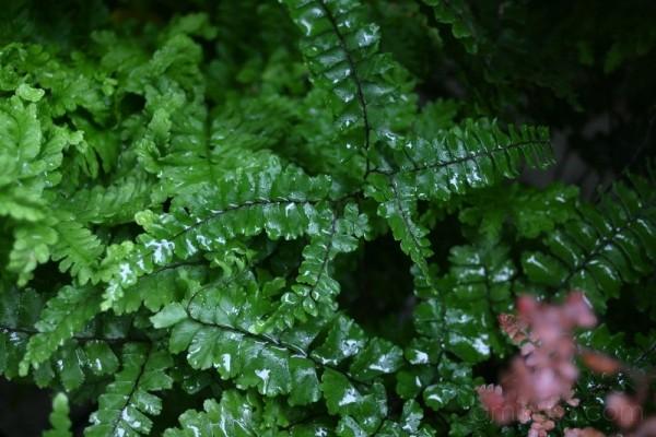 rain in paradise garden