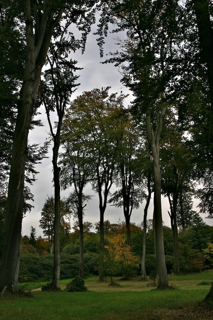 trees Heltorf