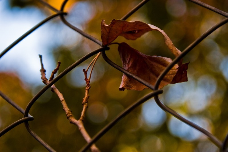 Autumn behind the fence!
