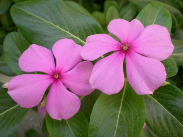 Flower, Flowers, Macros
