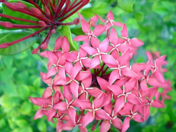 Flowers, Macros, Nature