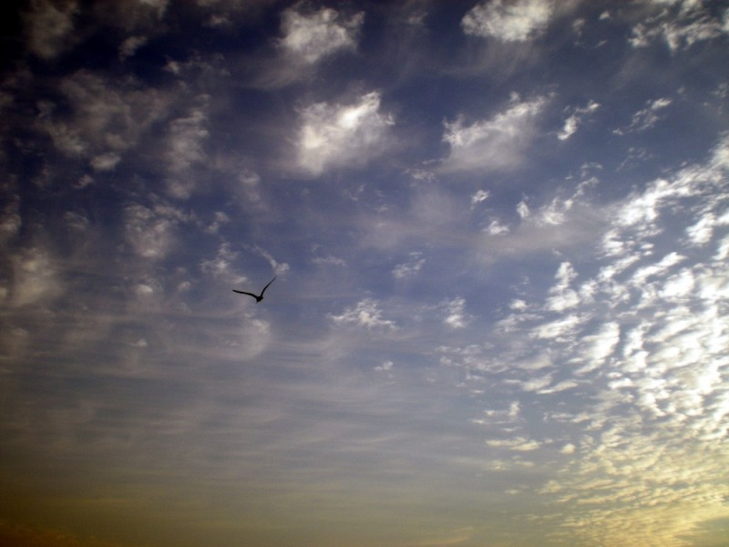 Bird, sky, clouds