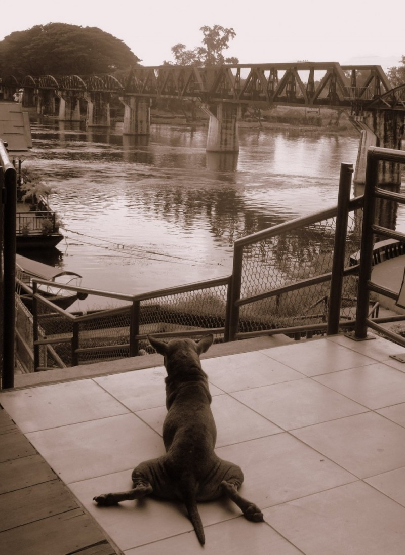 Dog &amp; Bridge of River Kwai