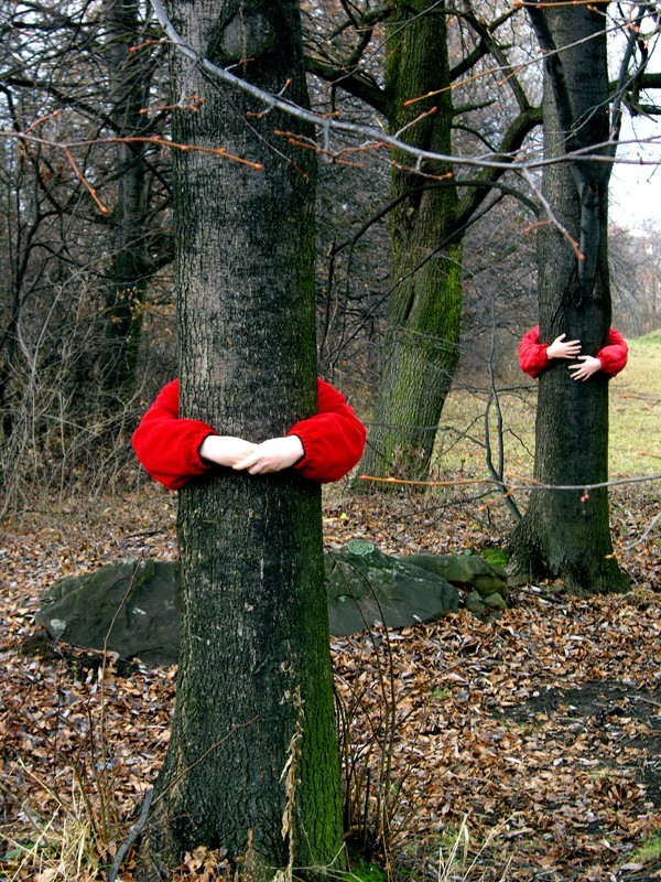Tree-hugging fungus
