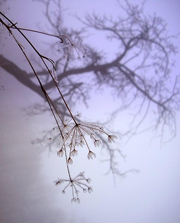 Fog - Cigel, Slovakia