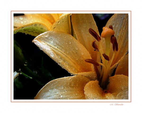 Drenched by droplets