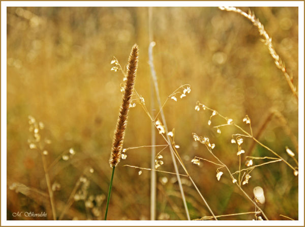 The gentleness of grasses