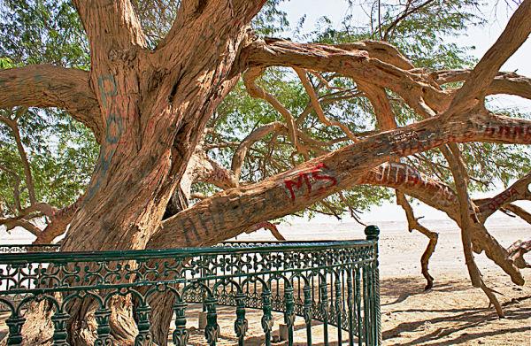 Tree of life (3)