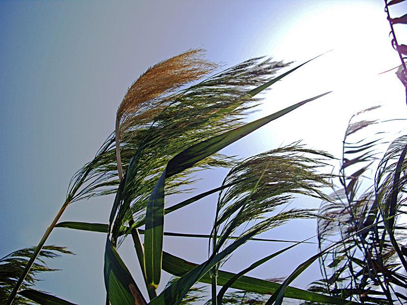 The joy of reeds