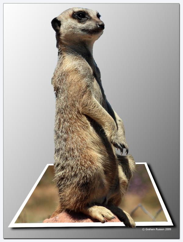 oob meerkat