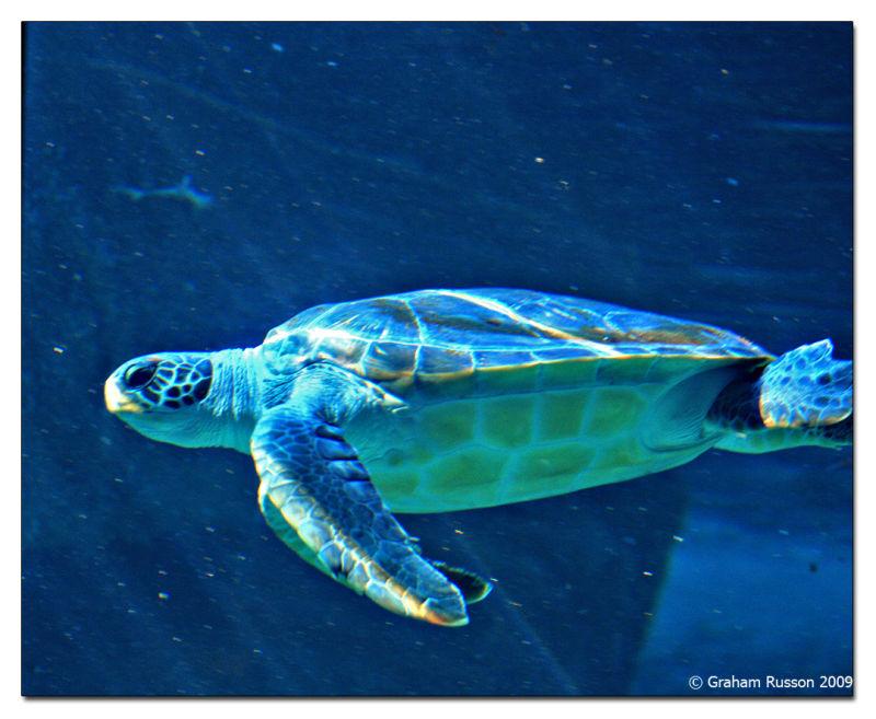 aquarium turtle