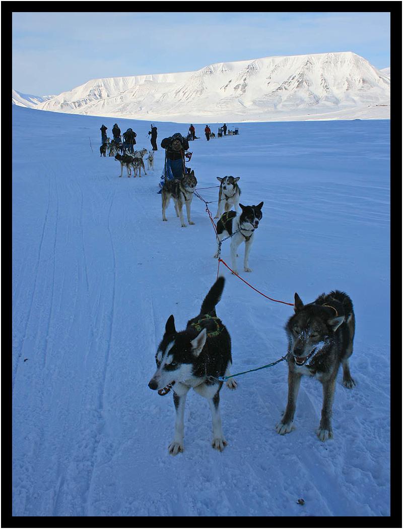 Svalbard Sled