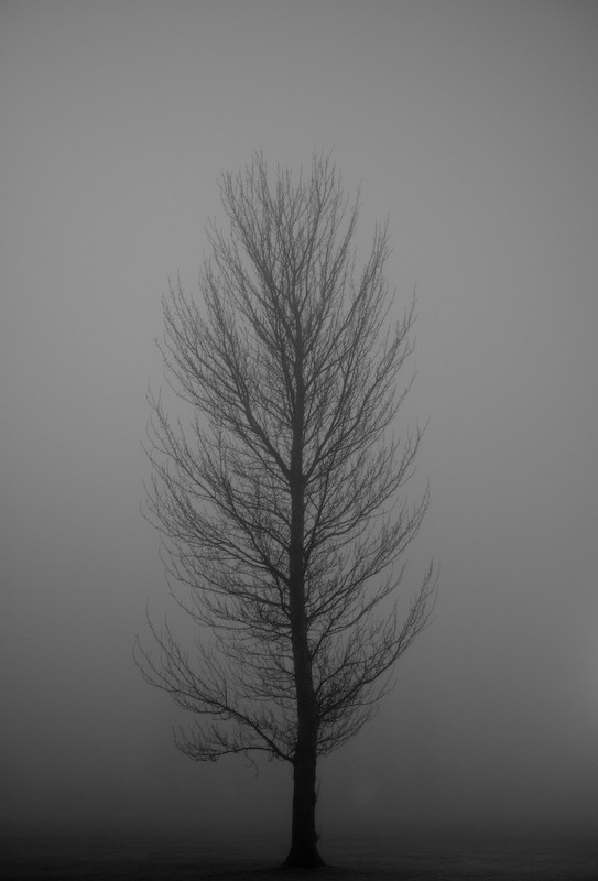 Monochrome shot of Tree against misty field.