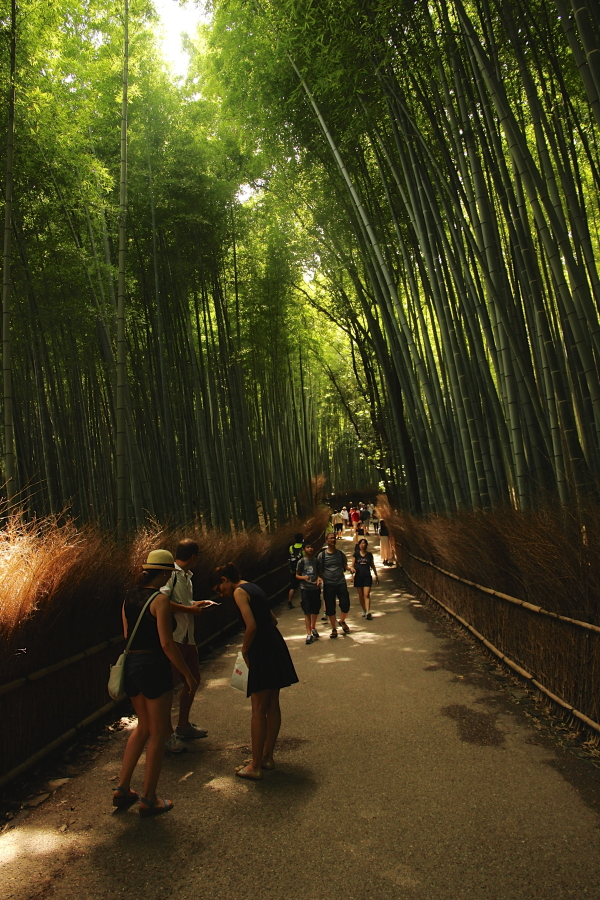 bamboo forest!