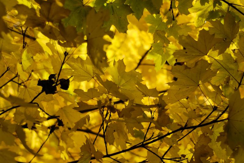 automne jaune Romans Drome 26