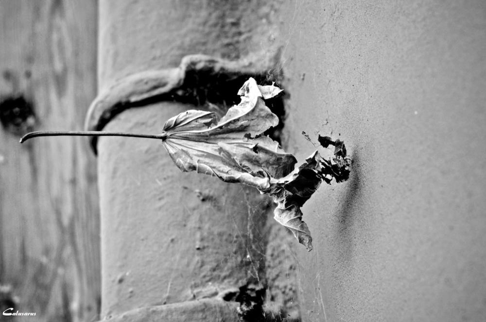 Arles N&B