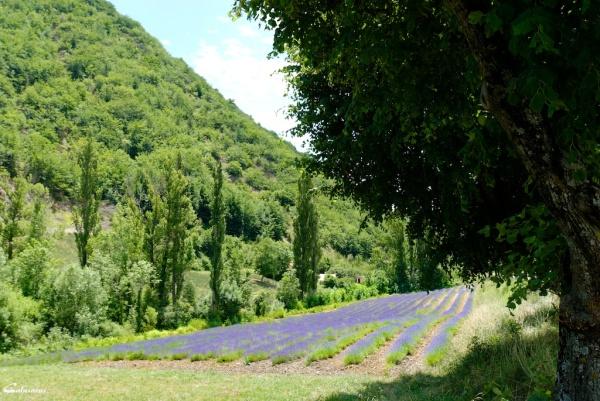Drome 26 paysage Chaudebonne