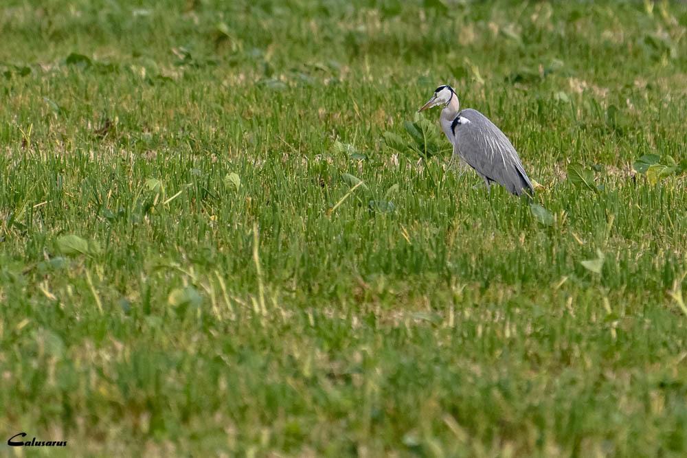 Oiseau Drome 26 Pizancon
