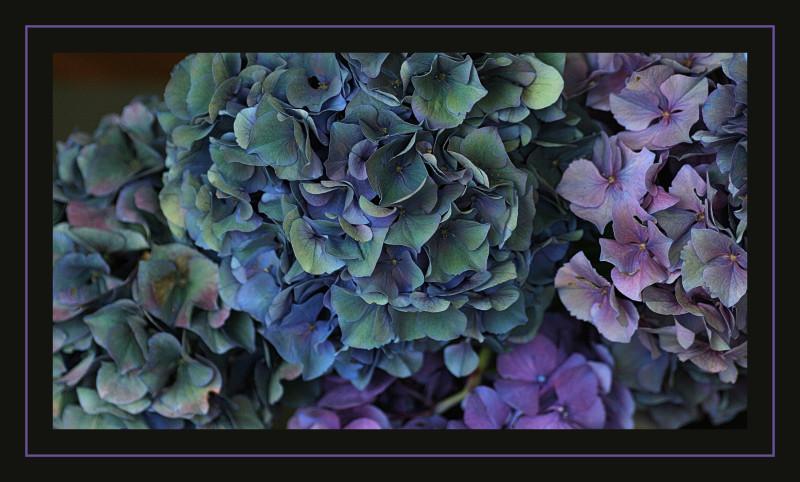 Delicious colors