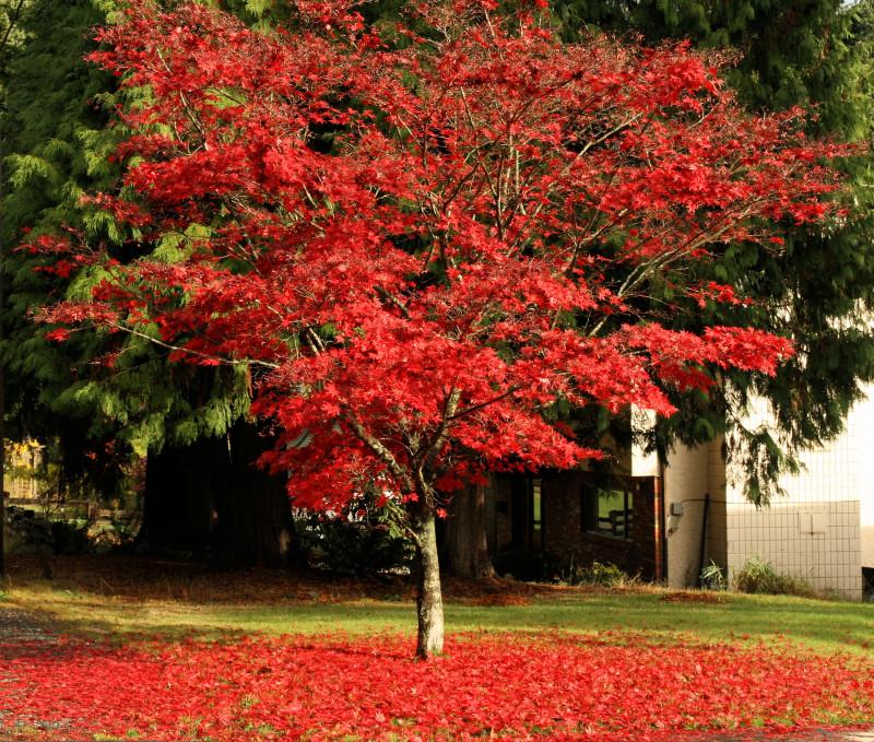 Fall iii - Pool of Red