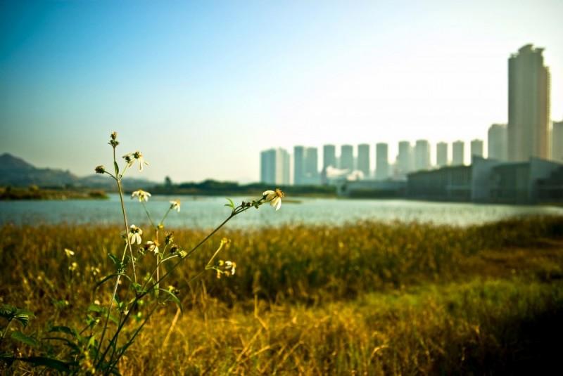 wetland part
