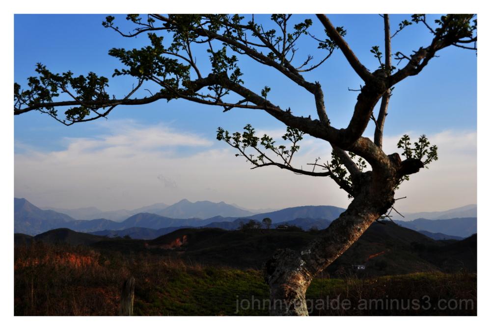 tree landscape Zaruma